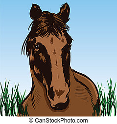 Wild horse portrait illustration