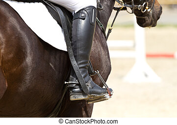 Dressage horse and a rider