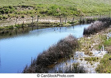Contry Pond - A prairie pond on a sunny day. Bright water,...