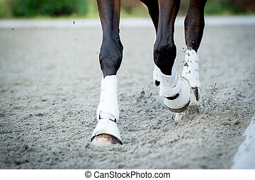 Closeup of the hooves from a horse while in trot on an...