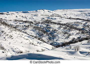 Winter Scene - A Winter scene near the picturesque ski...