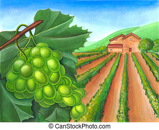 Grape and rural landscape - Grape and vineyard in a rural...