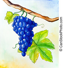 Wine grape and leaf. Hand painted illustration.