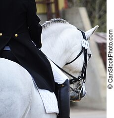 Dressage - Andalusian gelding at a dressage show