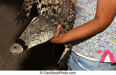 A closeup photo of a crocodile