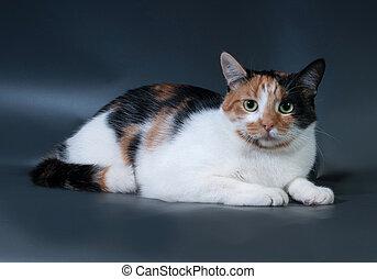 ojos,  tricolor, gato, negro, verde, acostado