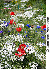 Patriotic Flower Garden - The patriotic flower garden with...