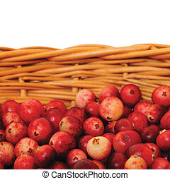 Fresh mountain cranberries, isolated Vaccinium vitis-idaea...