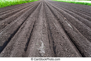 Freshly cultivated soil - Soil with stright lines before...
