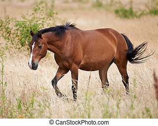 Brown Horse - Brown horse walking in the fields in the sun