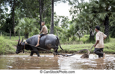 Happy boy riding water buffalo