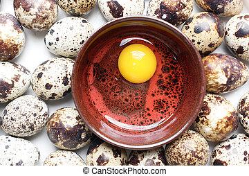 codorniz, huevos