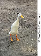 runner duck 03