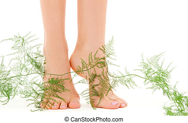 female feet with green plant - picture of female feet with...