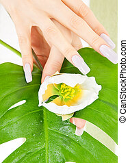 female hands with green leaf and flower - picture of female...