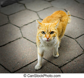 Homeless rufous cat on the road and looking hungrily