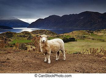 Lake Wanaka, New Zealand - Lake Wanaka, view from mount...
