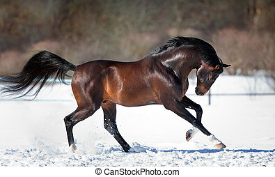 Horse running in the snow in winter.