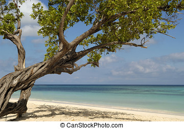 Beach with a tree at Cuba