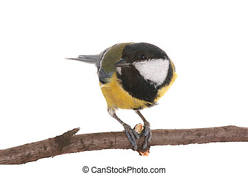 titmouse - titmouse to a sunflower seed on a white...