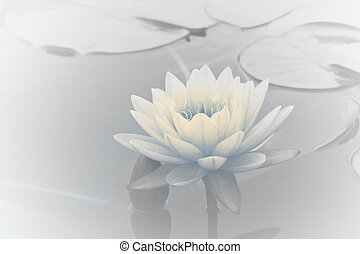 Water Lily - Water Lily