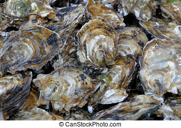 Oysters - Fresh oysters at a fish market