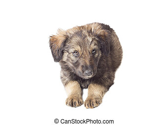 funny cute puppy on white background