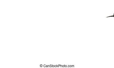 white shark that swims on black background, 3d illustration