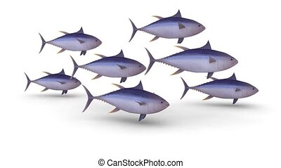 bench of yellow fin tuna on a white background, 3d animation