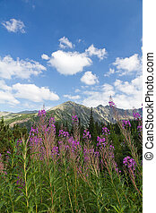 view on mountains and violet flowers fireweed on blue sky background