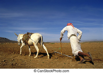Farmer in Yemen at work at his farm together with his donkey
