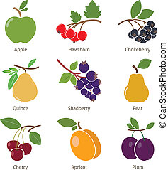 Fruits and berries Set Vector for your design