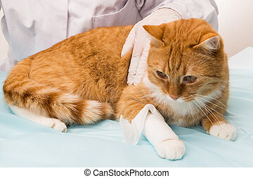 vet treatment - cat violation is treated by vet