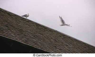 Seagulls sitting on wooden covered bridge zoom out -...