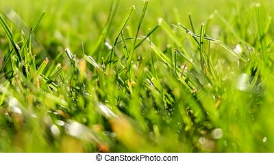 Spring or summer background with green grass.