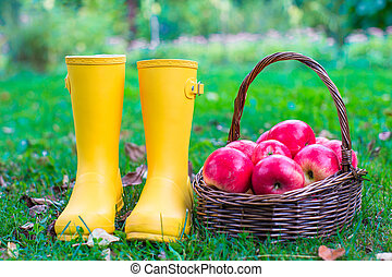 Closeup of yellow rubber boots and basket with red apples in...