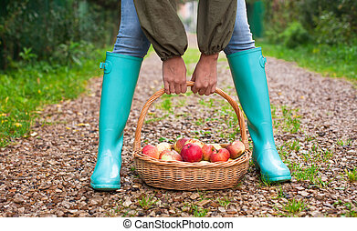 Closeup hands holding basket with yellow, red apples and...