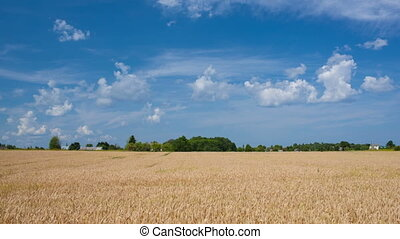 Timelapse of scene with wheat field and clouds in sky