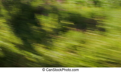 View of passing green trees from a high speed train