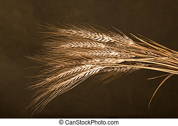 Sheaf Of Wheat - sheaf of wheat on the dark background