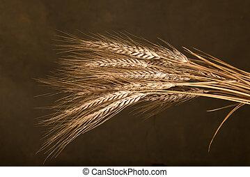 Sheaf Of Wheat - sheaf of wheat on the dark background