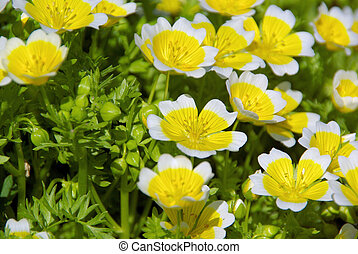 poached egg plant 03