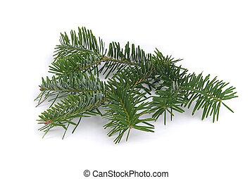 fir branch 03