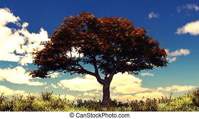 Autumn tree on sunny hill - Autumn scene