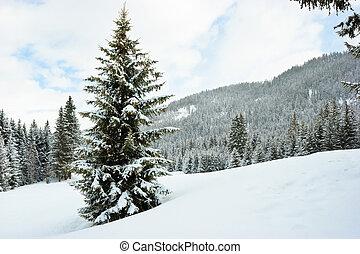 abete, montagna, inverno, albero