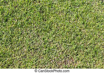 grass pattern, texture