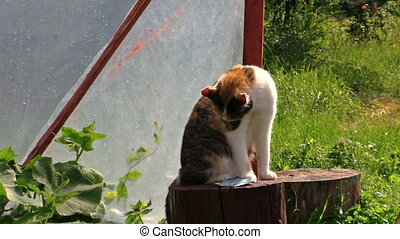 grandma cat greenhouse - Cat sit on stump and old senior...