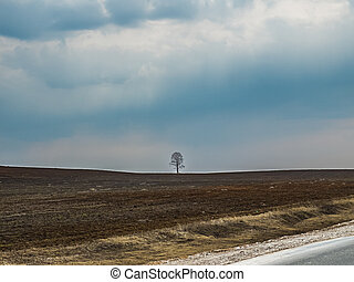 Image of lonely tree and blue sky