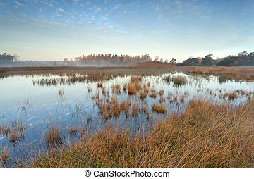 autumn sunrise over wild lake in forest, Friesland,...