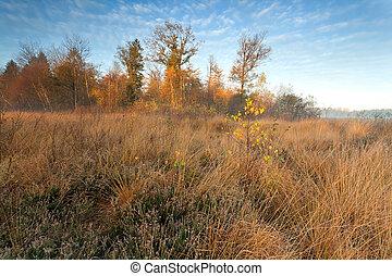 gold misty sunrise in autumn forest, Friesland, Netherlands